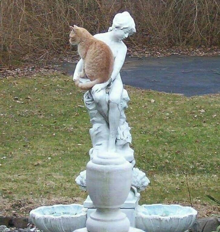 рыжий кот на памятнике