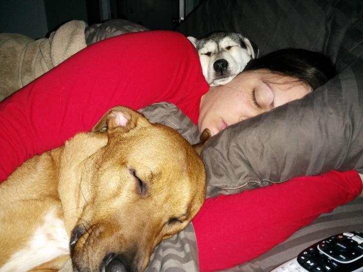 собаки спят рядом с хозяйкой