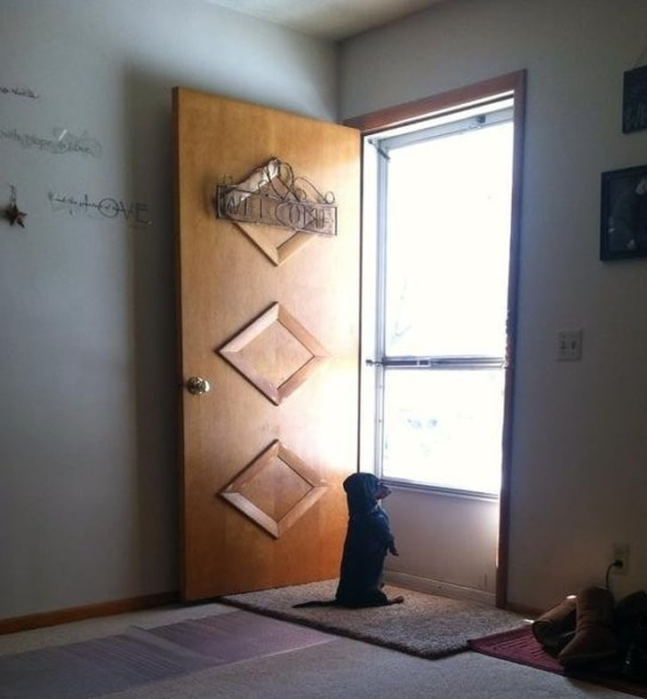 такса сидит на пороге двери