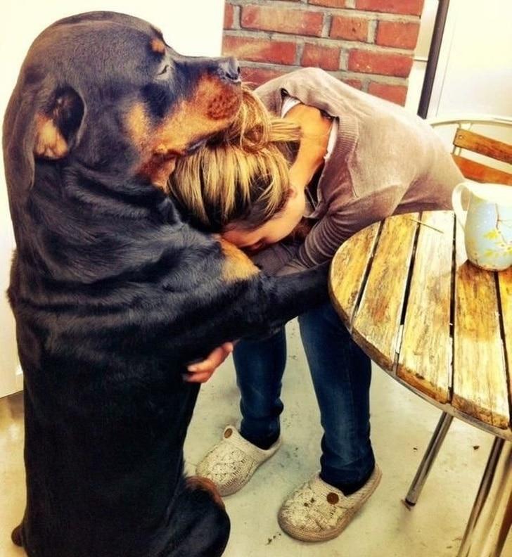 ротвеллер обнимает девушку