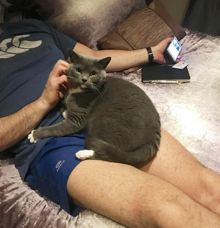серый кот на коленях у мужчины