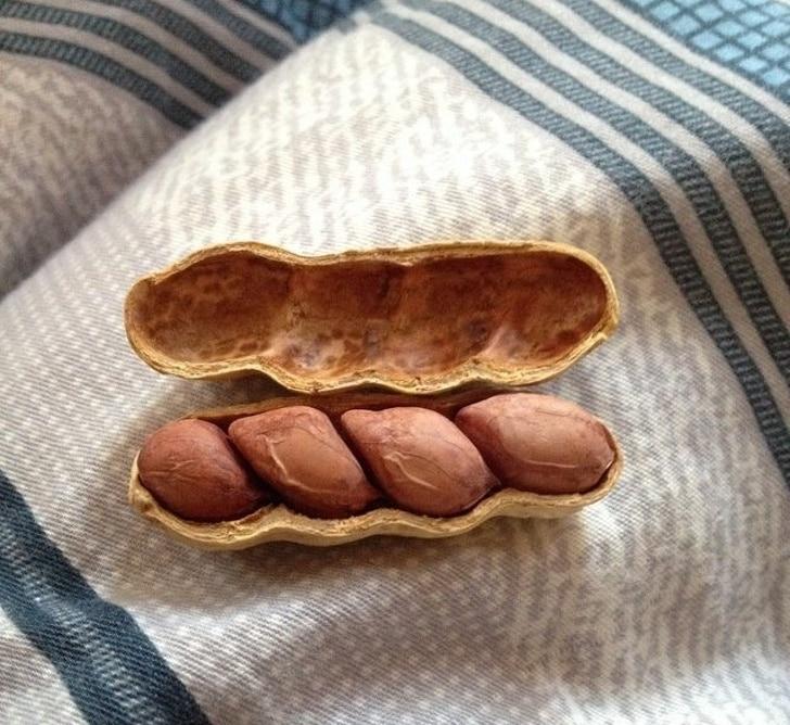 стручок арахиса