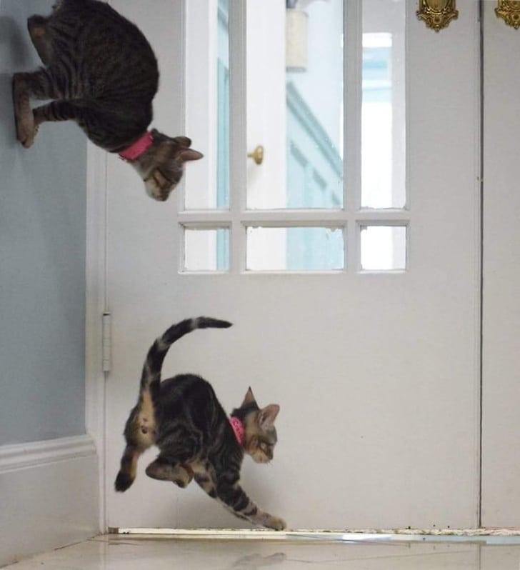 коты возле двери