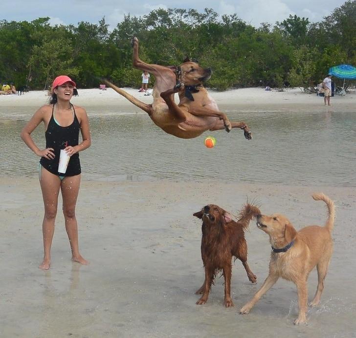 собаки с хозяйкой на пляже