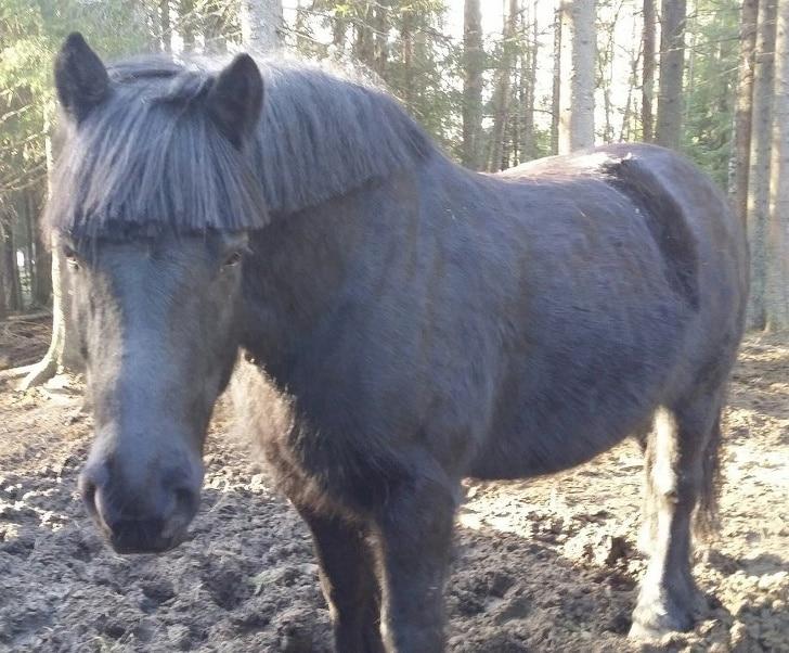лошадь с постриженной гривой