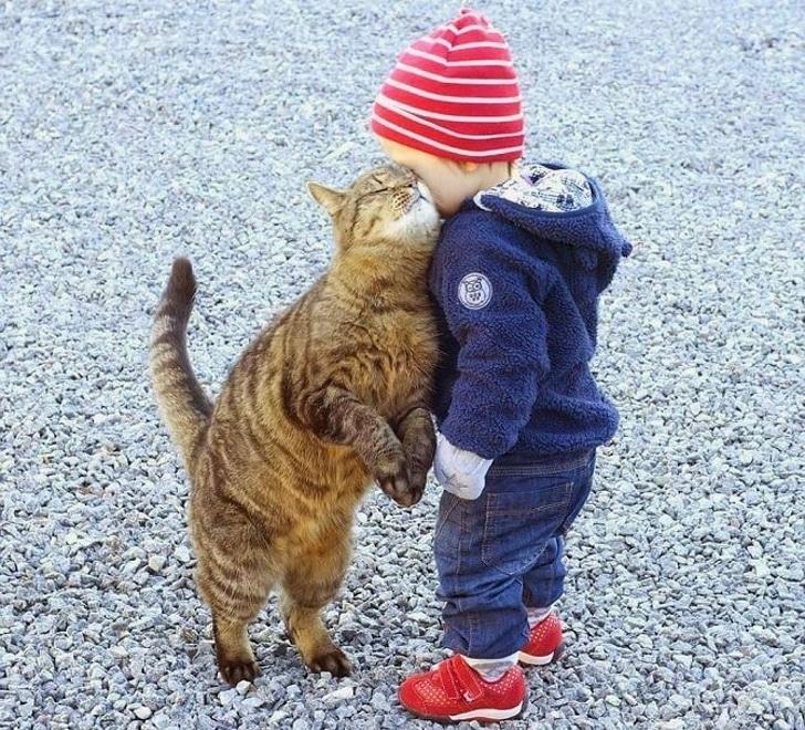кот и ребенок рис 2