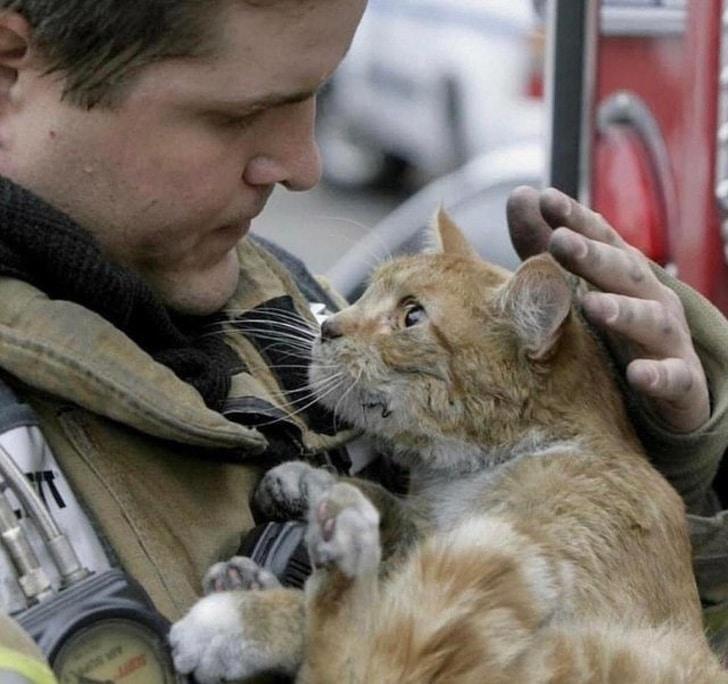 благодарный кот