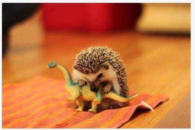 еж грызет игрушечного динозавра