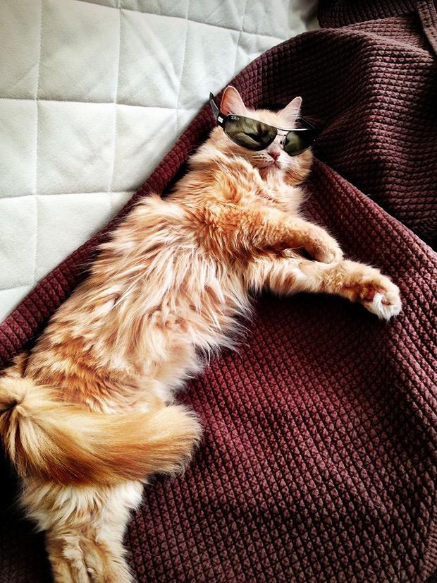 рыжий кот в солнцезащитных очках