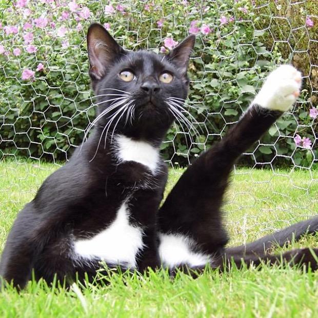 черно-белый кот на траве