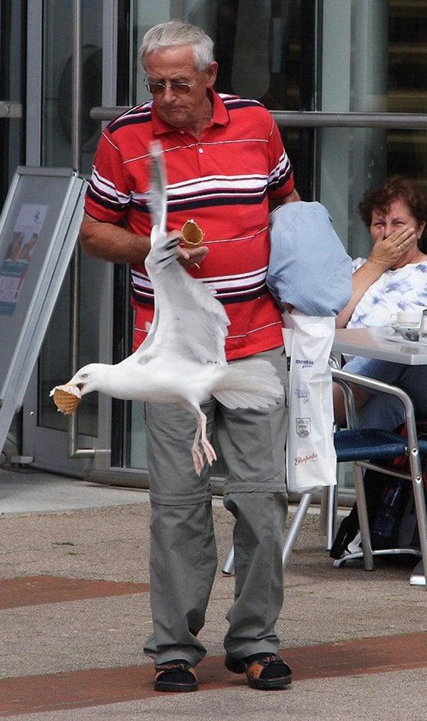 чайка украла мороженое