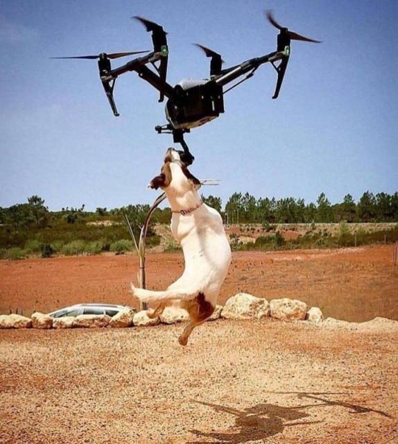 квадрокоптер и собака