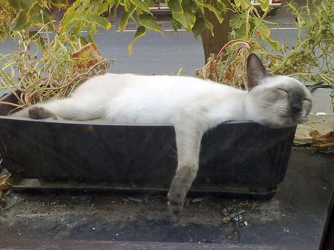 кот уснул в горшке