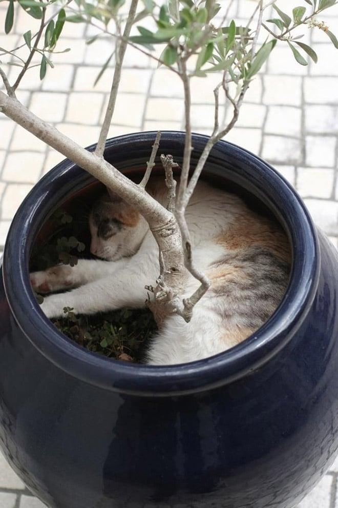 кот спит вазоне