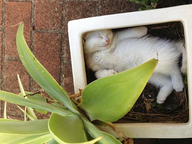 спящий кот в горшке