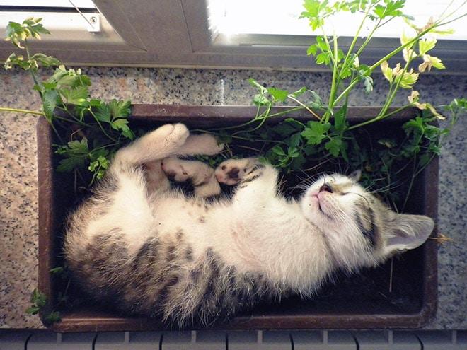 котёнок спит в домашнем растении