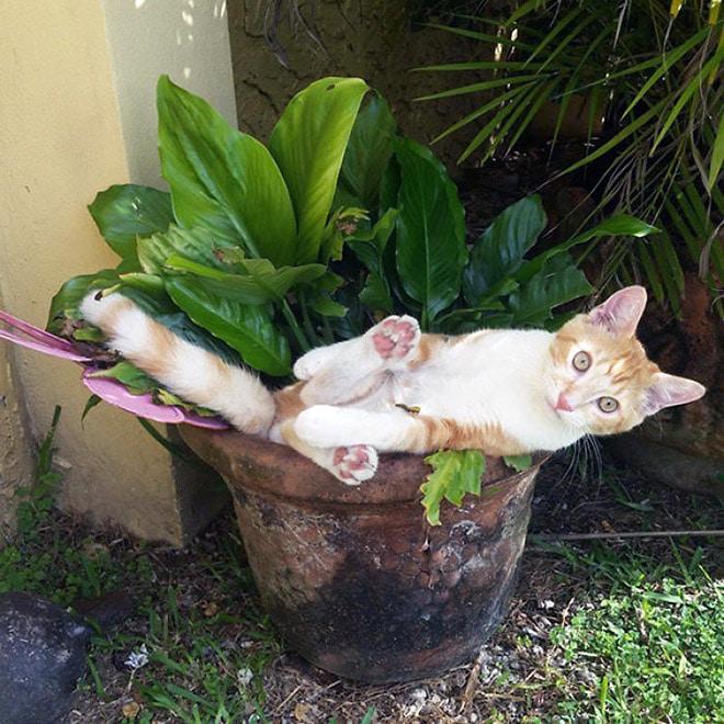 кот и вазон цветов