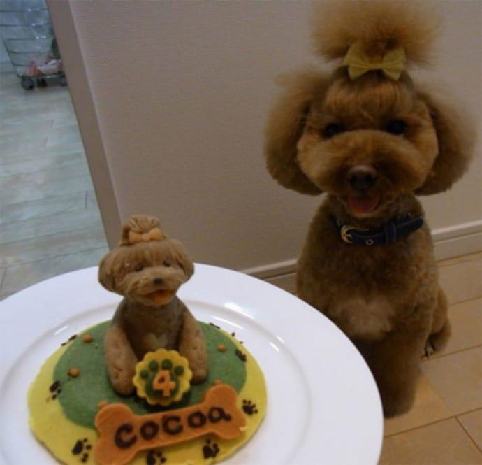 собака и его торт на день рождения