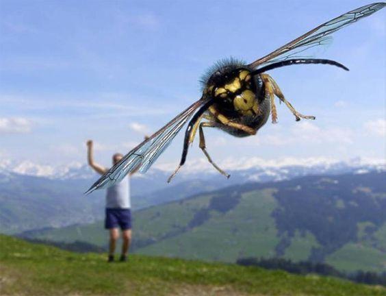 макросъёмка осы