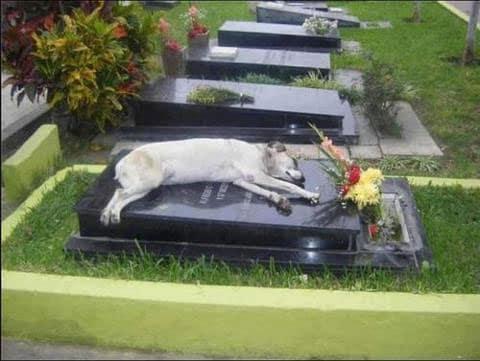 собака спит на могиле хозяина