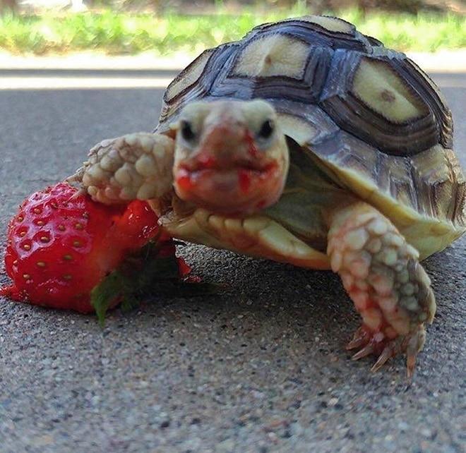 Открытки для, картинка черепаха прикольные