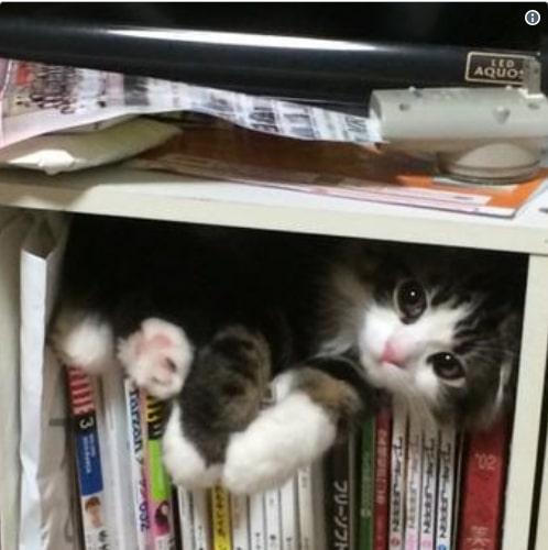 полосатый кот на книгах