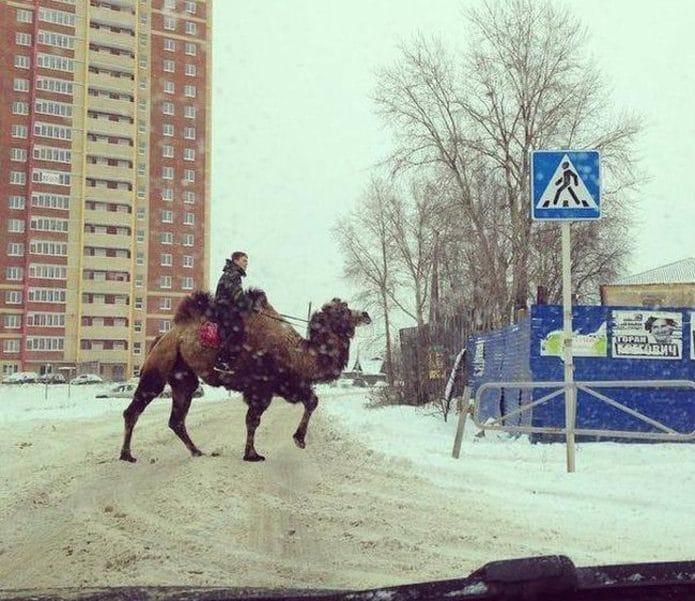 мужчина на верблюде