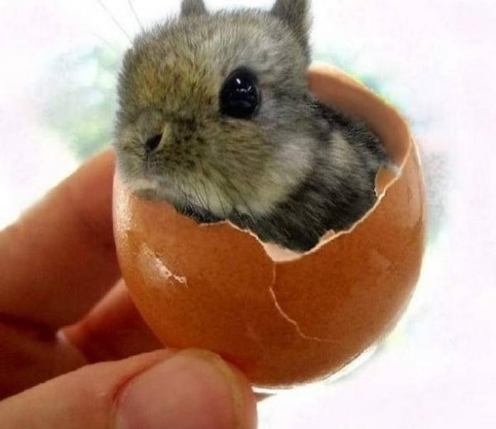 кролик в скорлупе от яйца