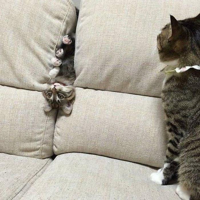 кошка и её котенок