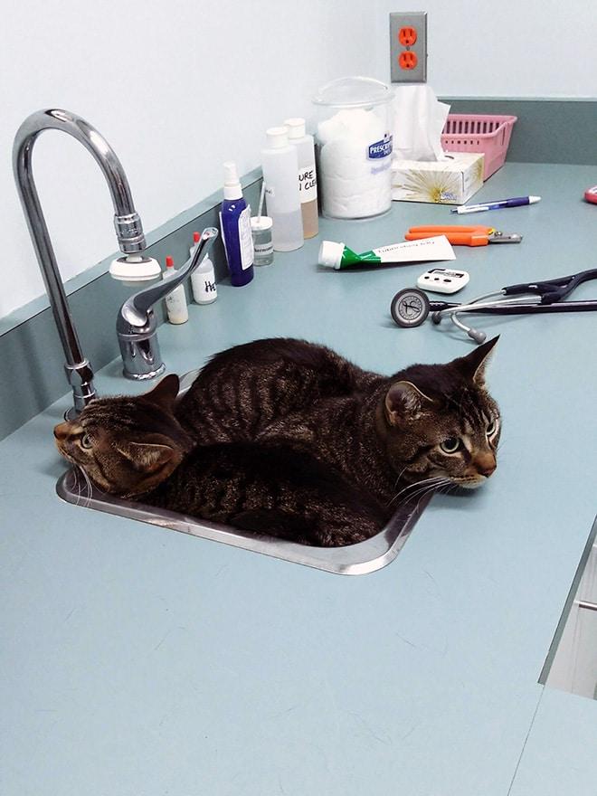 коты сидят в умывальнике