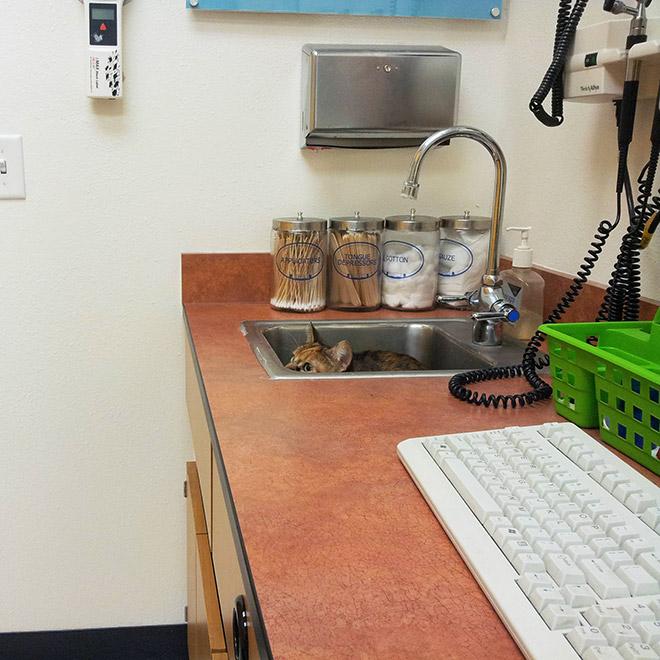 кот подсматривает из умывальника