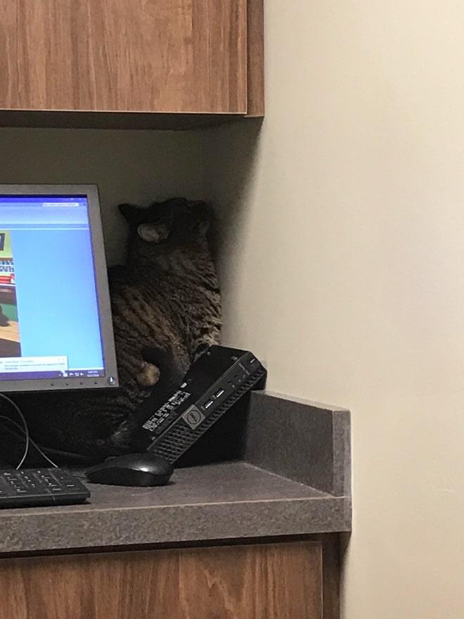 кот боится ветеринара