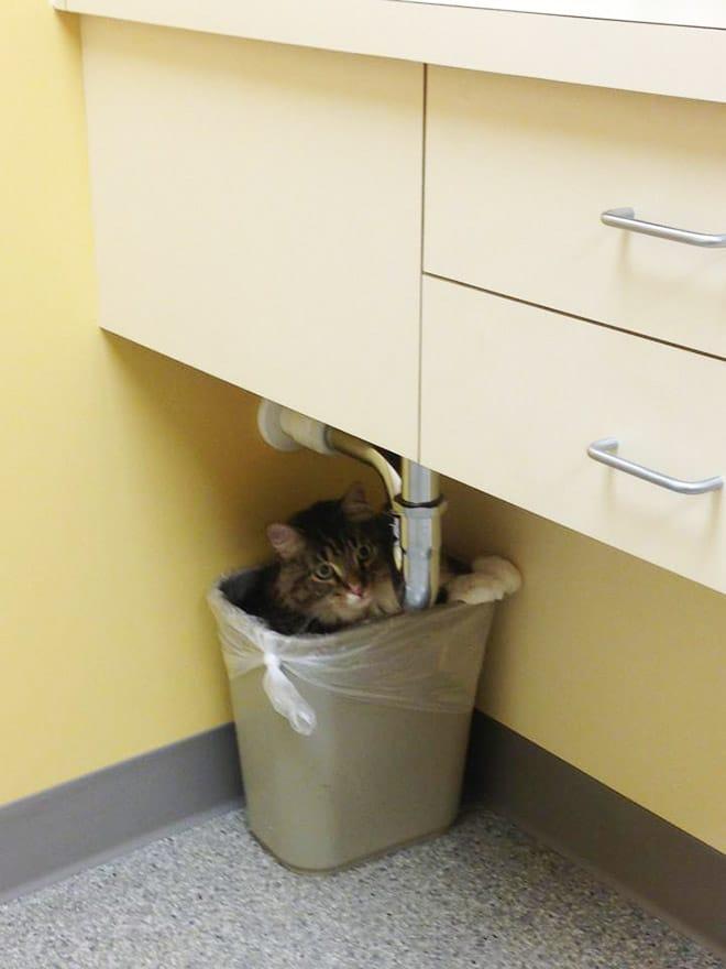кот сидит в мусорном ведре
