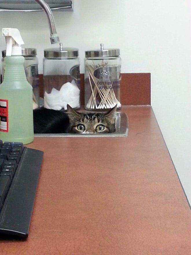 кот посматривает из раковины