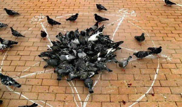 голуби в центре круга