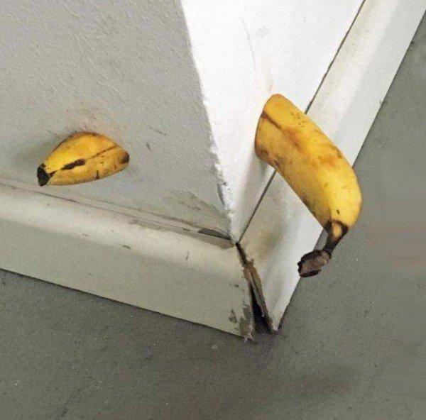 банан в стене