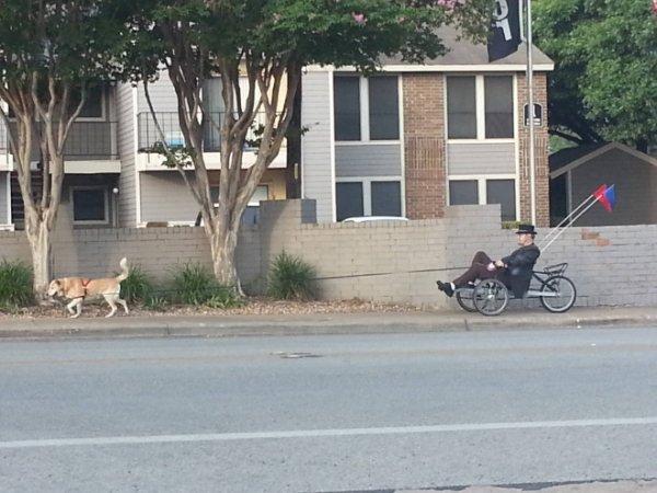 мужчина выгуливает собаку на четырехколесном велосипеде
