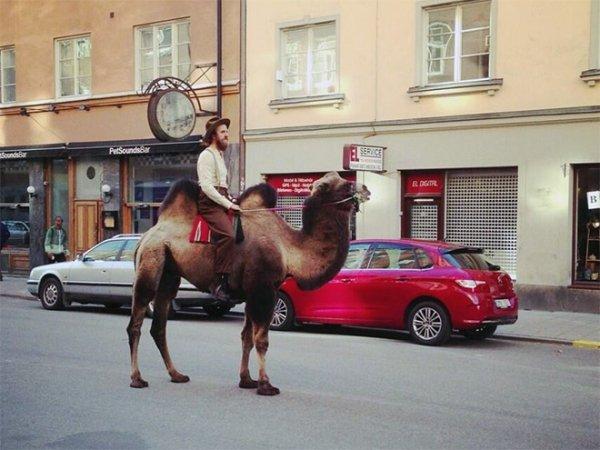 мужчина верхом на верблюде в городе
