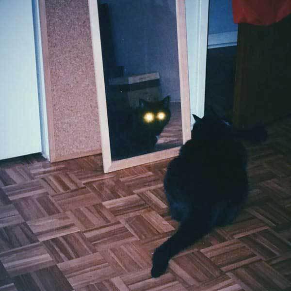 отражение черного кота в зеркале