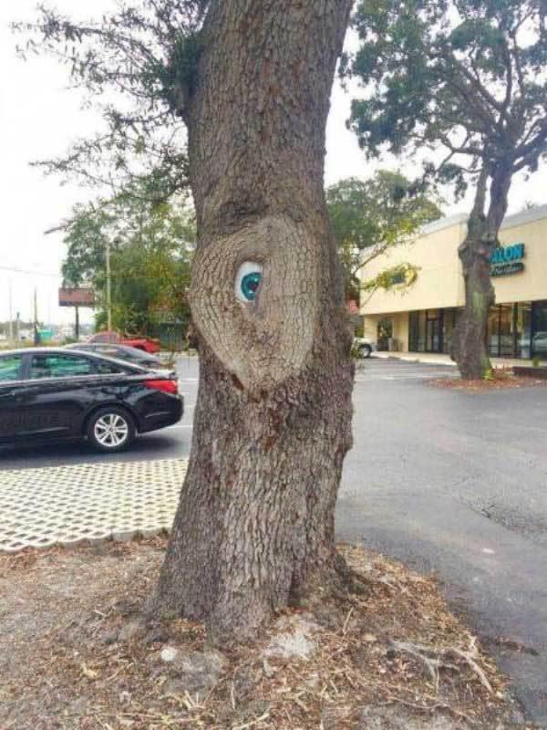 дерево с глазом