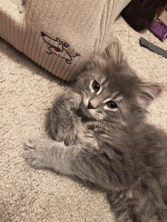 серый котенок на полу