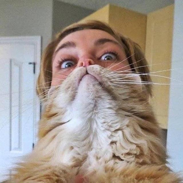 девушка и её кот