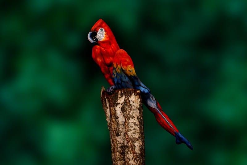 человек, раскрашенный под попугая