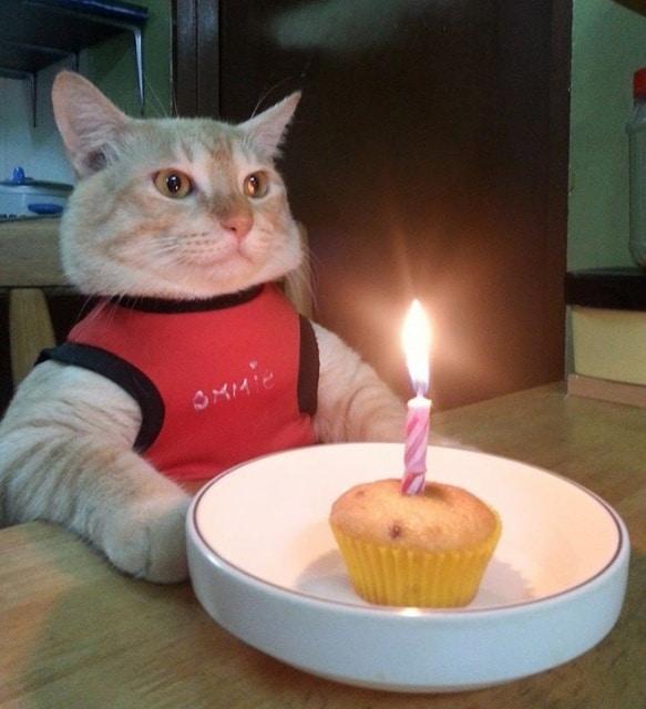 кот празднует день рождения