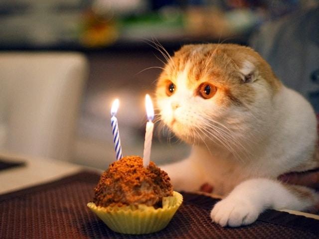 кот и кекс со свечами