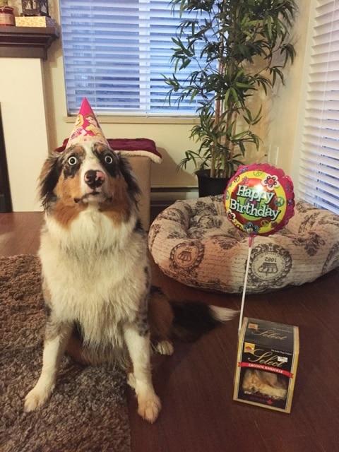 пес и его подарок
