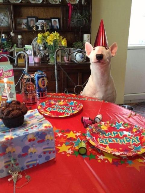 собака за праздничным столом