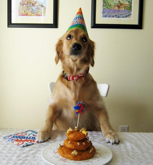 собака и его день рождения