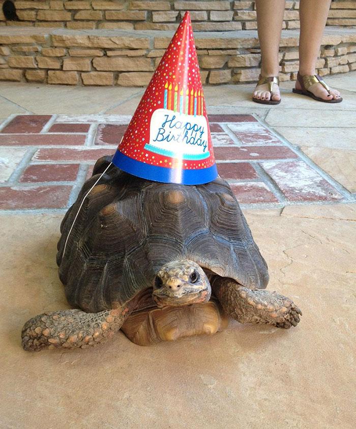 черепаха-именинник