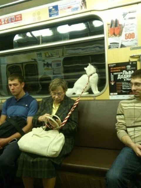 женщина с кошкой в метро